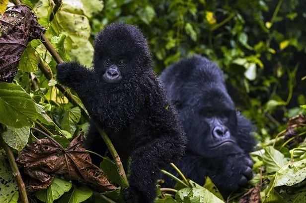 espero virunga national park