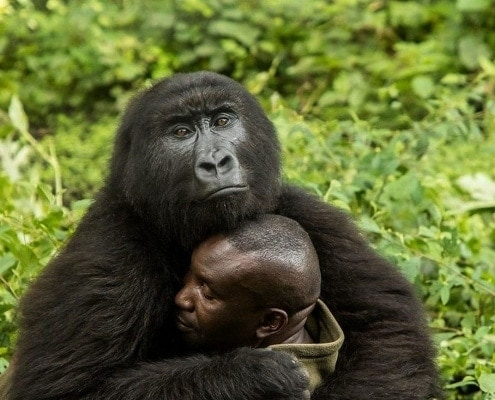 espero clothing gorilla